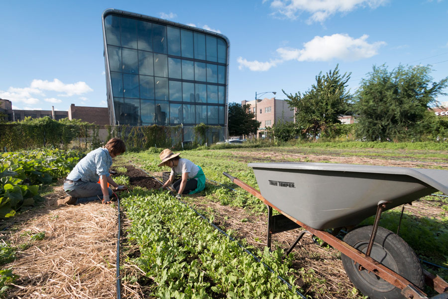 City Farm's previous lot is now home to a single-room-occupancy building.