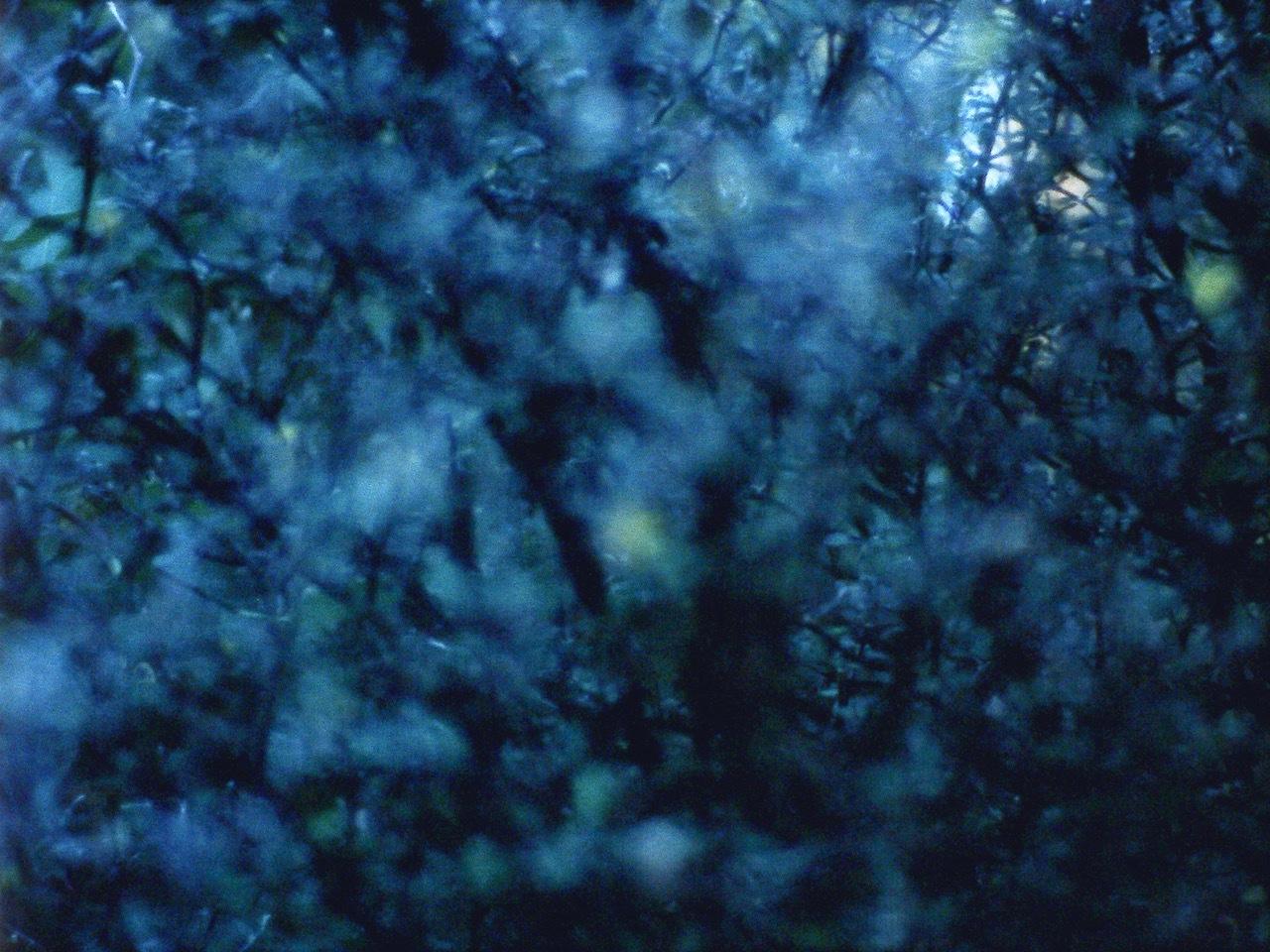 From <i>Monody</i>, the sixth piece of <i>The Arboretum Cycle</i>