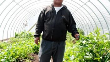 Pak Suan in Global Gardens' main hoop house