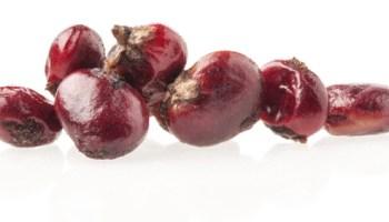 Dried sumac berries