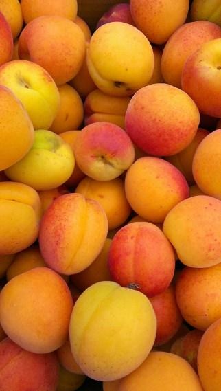apricots-433008_1920