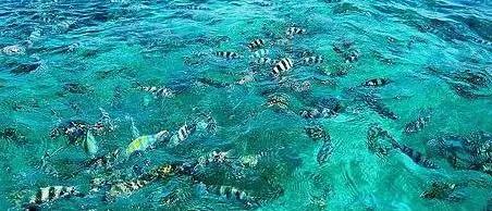 Zebrafish at Malindi Marine Park