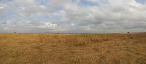 Mikumi National Park Landscape