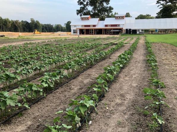 Woodside Farms progress 8/18/18