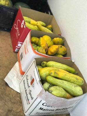 Squash for Shalom Farms