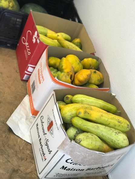 Squash for Shalom Farms