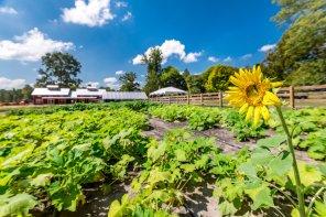 Barn Farm Progress