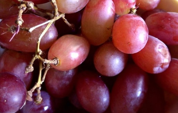 grapes on what can I feed my chickens to keep them healthy