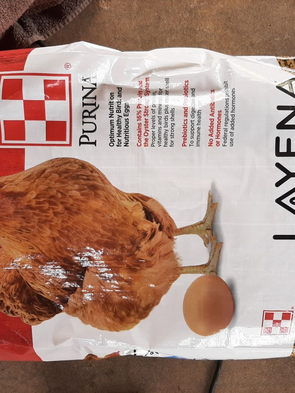 Layer feed for chickens