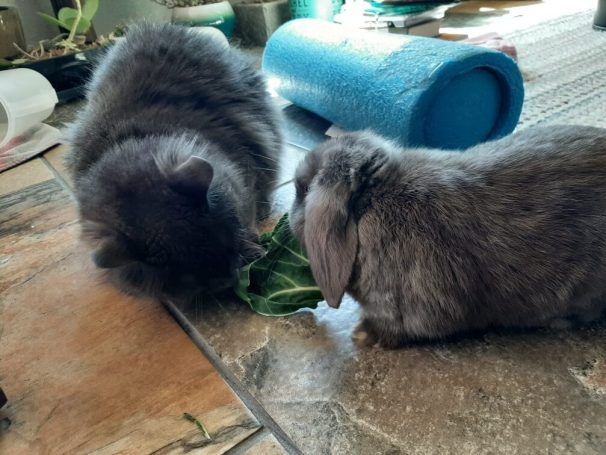 very cute cat and bunny eating together