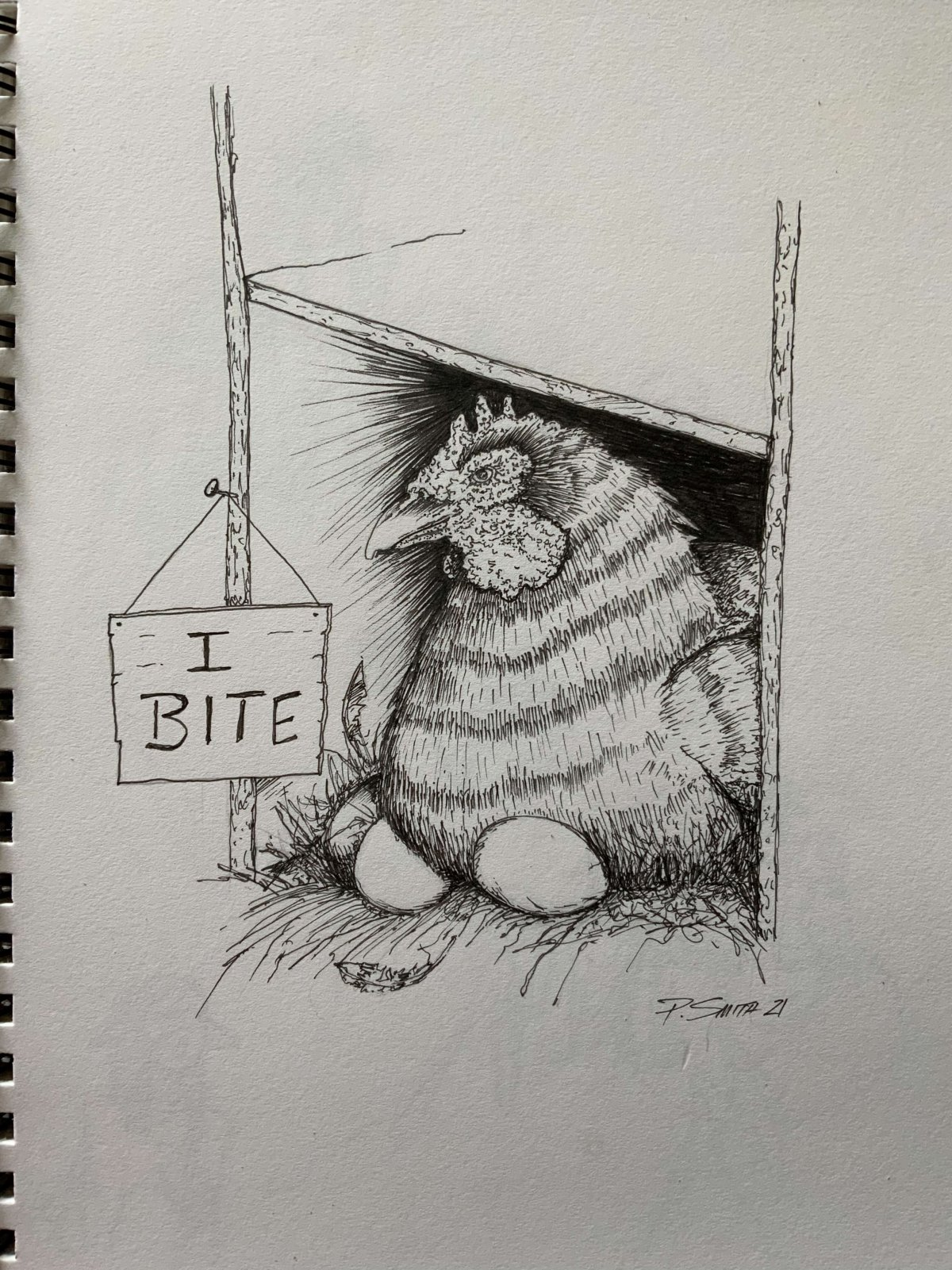 sketch of broody hen courtesy of Paul Smith