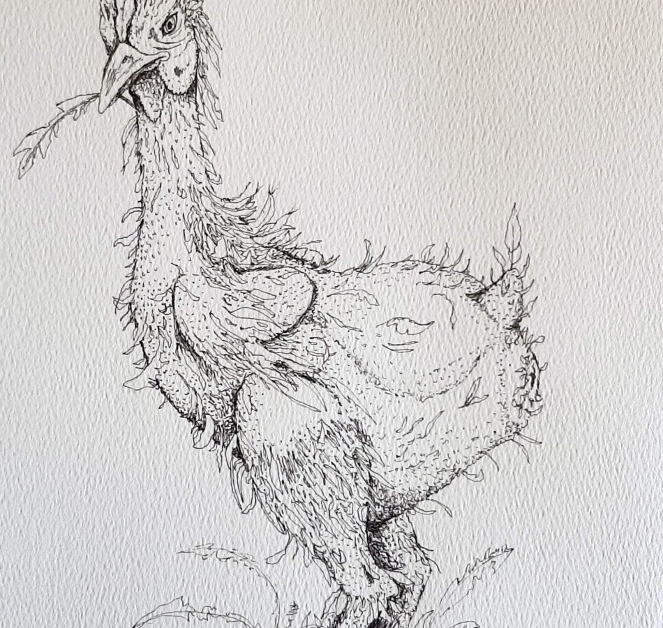 chicken with pile of feathers at its feet