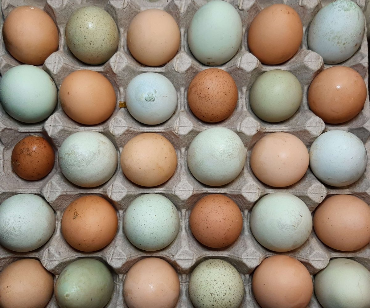 different colored and sizes of egg shells