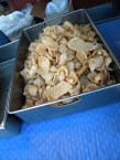 Pork Rinds fresh out of the fryer