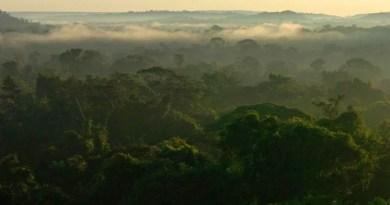 7 cursos relacionados ao meio ambiente e à sustentabilidade
