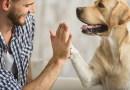 """Ação Social """"Petiscos ou Travessuras"""" arrecada ração e produtos de higiene para animais da ONG Salvação"""