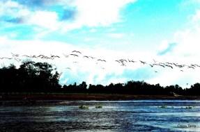 © http://chicoterra.com - esporte - campeonato de surf na pororoca - Cutias do Araguari