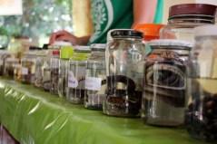 biodiversidade bioparque (10)