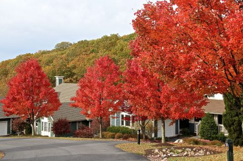 Red Trees_3