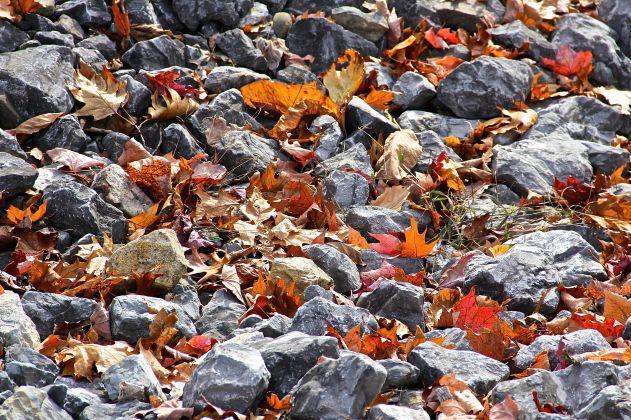 Rocks, Leaves