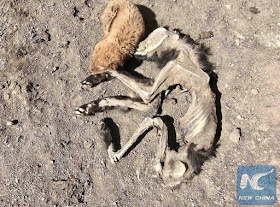 photos of a puppy beside the remains of its mother