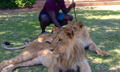 See What Happened Jim Iyke When Tried Petting Lions And Cheetah