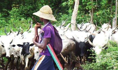 Fulani herdsmen behead elderly farmer in Oyo