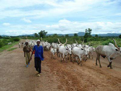 Cattle Rustlers Kidnap Local Government Boss In Zamfara State