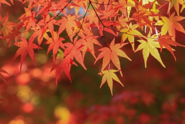 薬師池の紅葉まつり