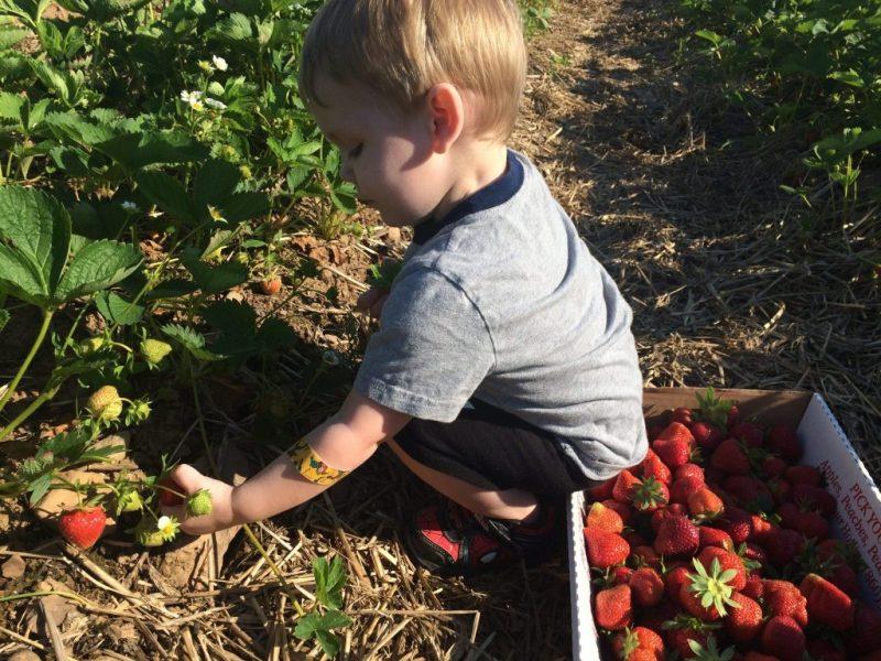 Baby strawberries
