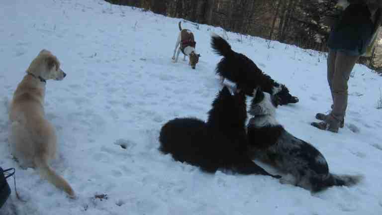 Astuces pour gérer les autres chiens en balade…