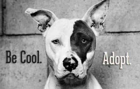 chien education