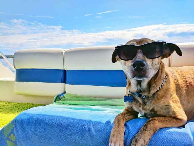 chien vacances