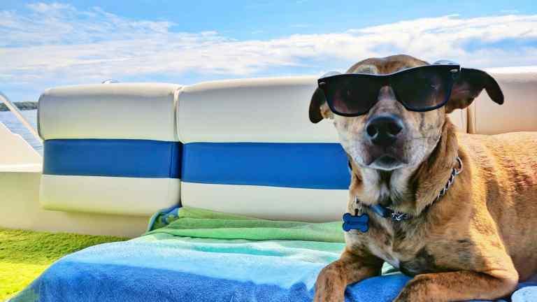 Partir en vacances avec son chien !