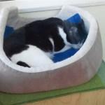 新城の福猫のがいるところでオータムジャンボ買ってきたよ