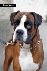 Boxer à Paris