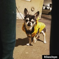 ChihuahuaParis