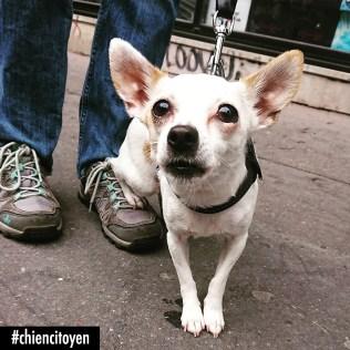 ChihuahuaParis11