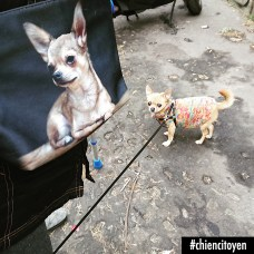 ChihuahuaParis20