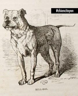 Le bulldog en 1883