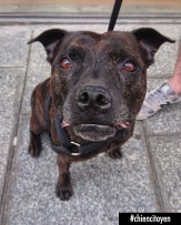 Fanch Staffie Paris 2