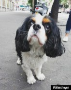 JoukyCavalierKingCharlesParis11