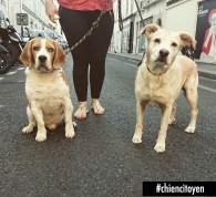 Lucky le Beagle et Ella croiselabrador Paris7