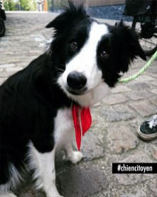 Ojhaia Border Collie à Paris