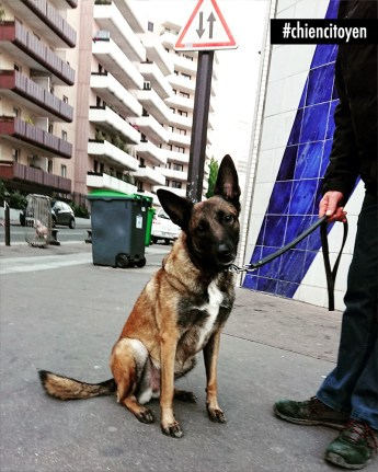 Skira, Berger Belge Malinois Paris 13