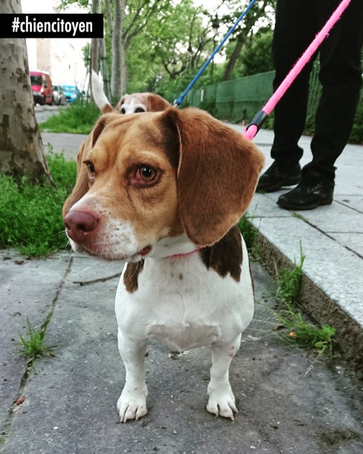Beagle2Paris11