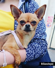 ChihuahuaParis18