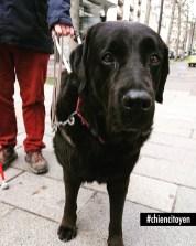 LabradorParis15