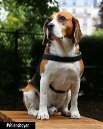 BeagleParis12