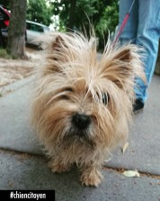 NoisetteCairnTerrierParis12